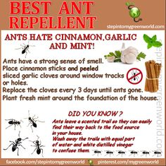 ☛ BY POPULAR DEMAND: MY FAVORITE ANT REPELLENTS!  Spring is almost here and it brings ANTS with it.  FOR ALL THE INFORMATION:  http://www.stepintomygreenworld.com/greenliving/around-the-home/best-ant-repellents/  ✒ Share | Like | Re-pin | Comment