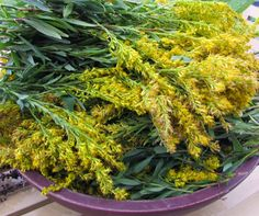 Clearwater Farm: Dyeing Wool with Goldenrod