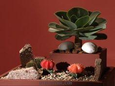 Luz en casa | Maceta con cactus