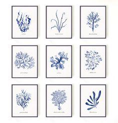 Botanical print set Seaweed print Set of 3 Coastal art by colorZen