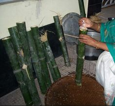Sunga Bhat.. rice poured inside the bamboo to get it cooked though steam..!!