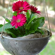 From kitchen cast-offs to junk store finds, if it has drainage holes and can hold potting mix, you can plant flowers and herbs in it. Get inspired with unusual containers at The Home Depot's Garden Club.