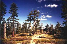 Shaffer's High Sierra Camp