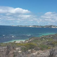 Visiting Rottnest Island #rottnest #rottnestisland #tourist #island #wa #westernaustralia #australia #perth #travel #backpacker #exploring #nofilter #nofilterneeded #perfect #beautiful #stunning #cycle #bike #bikeride by dea_0703 http://ift.tt/1L5GqLp