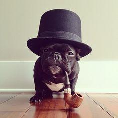 Dog#French Bulldog#Franse bulldog