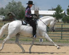 THE WESTERN DRESSAGE ASSOCIATION OF AMERICA Frances-Carbonnel-Fino