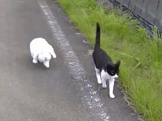 GIF: Vamos de paseo compañero