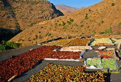 Driying Fruits  by Nesiho  Asiraki on 500px#axkis #castle #earth #freedom #history #hizan #kurdistan #life #mountains #nesiho asiraki #sinban #universe #Kurd #rojava #kurdish #saladin #Mesopotamia #arbil #erbil #hawler #iraq #karkuk #kerkuk #kirkuk #kurd #kurdish #kurdistan #old #sad #sulimanya #true #wisdom