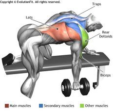 Gain More Mass With These Weight Training Tips! It can be fun to lift weights if you do it safely and correctly. You can enjoy yourself and see the progress of an effective workout routine. Fitness Workouts, Sport Fitness, Muscle Fitness, Mens Fitness, Fitness Motivation, Workout Routines, One Arm Dumbbell Row, Dumbbell Workout, Kettlebell