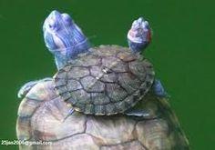 Baby turtle<3