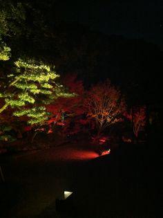 博多ライトアップウォーク2012 博多千年煌夜:承天寺