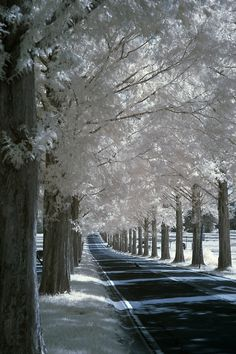 one of my favorite things in winter is the snow so gently resting on the branches of trees...just so pretty....