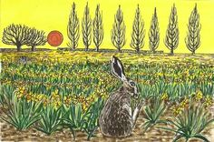 Hare in a Narcissus field - artist pen