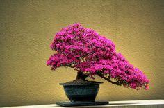 bonsai garden | Flickr - Photo Sharing!