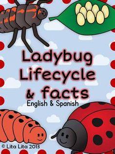 Ladybug life cycle and facts craftivity