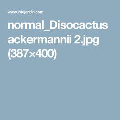 normal_Disocactus ackermannii 2.jpg (387×400)