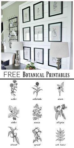 Free Black And White Botanical Prints