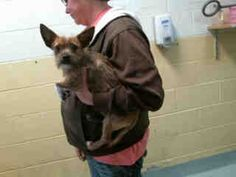 TulsaArea TornadoPets - (Tulsa Animal Welfare) Male chihuahua found 3/26 #A076491