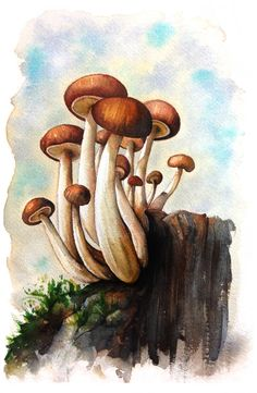 Mushrooms Watercolor on Behance Botanical Drawings, Botanical Art, Botanical Illustration, Illustration Art, Mushroom Paint, Mushroom Drawing, Watercolor Flowers, Watercolor Paintings, Gouache