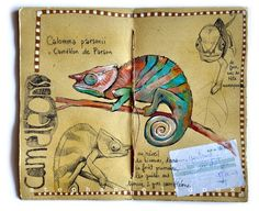 awesome journal documenting a Madagascar trip... If only it were in English!
