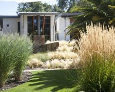 pampas grass - Google Search