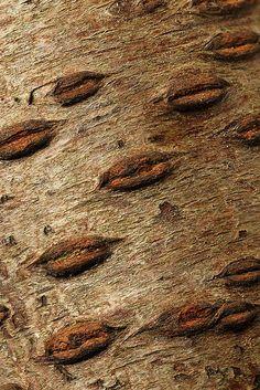 creepy, looks like lips.  Peach tree bark