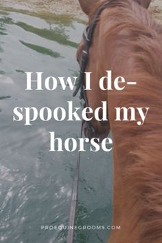 How I *Mostly* Clicked The Spook Out of My Horse