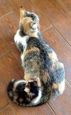 Cat you spot the kitten?