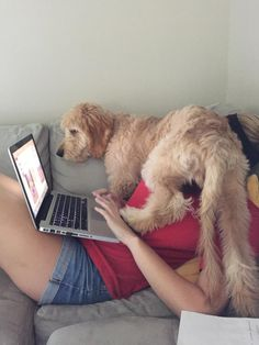 When you're trying to use your computer and your #dog wants attention...