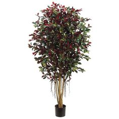 5' Ficus Retusa With Air Roots Silk Tree w/Pot -2,820 Leaves -Green/Red -- Click image to review more details.