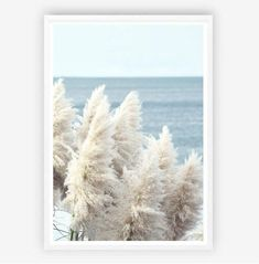 Pampas by the Sea Print Wall Art for Sale – Milk n Honey Designs Wall Art Prints, Poster Prints, Framed Prints, Coral Watercolor, Wall Art For Sale, Photography For Sale, Pampas Grass, Design Art, Honey