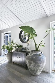 indoor decorative plants to bring freshness; in… indoor decorative plants to bring freshness; home decoration with indoor plants zone Home Interior, Interior Decorating, Interior Design, Decorating Office, Decorating Websites, Modern Furniture, Home Furniture, Furniture Design, Rustic Furniture