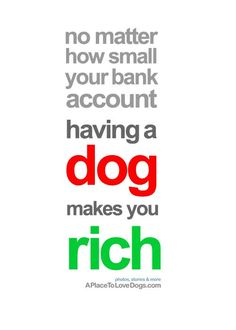 Having a dog makes you rich - A Place to Love Dogs
