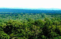 Vast Kakamega Forest