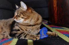 Al Pacino modelling his catnip fish toy!