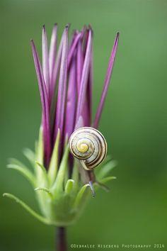 Snail | DebraLee Wiseberg