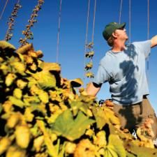 Drink Globally, Hop Locally: Boutique American Hop Farms are a Growing Inspiration to Brewers