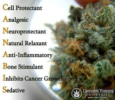 Marijuana plant is a cure many disease | theCTU.com