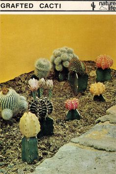 Easiest garden ever. Is it weird that I really want a cactus? I totally want this garden!