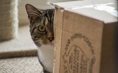 Science Finally Answers Why Cats Like Boxes So Much