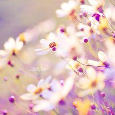 lovely #garden #flower