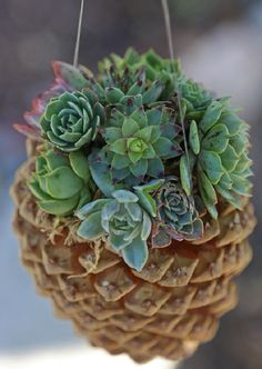 Eco-Friendly Pine Cone Succulent Planters