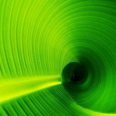الأخضر:- إنه لون الطبيعة نفسها، ويعد رمزا للشباب والازدهار والتجدد. فهو اللون الأكثر هدوءاً، والذي يشار إليه على أنه دعوة للسلام والاستقرار. ويعتقد أن العلاج باللون الأخضر يساعد في تطبيع نشاط القلب والأوعية الدموية، مع تقليل الخفقان وانتظام ضربات القلب واستقرار ضغط الدم. فالأخضر له الأثر الفعال ضد الصداع والعيون المرهقة، كما أن الطبيعة الخضراء تشعرنا بالراحة مع الإحساس بالنضارة وتجدد النشاط. تخيل قضاء الصيف على العشب الأخضر في يوم دافيء جميل، وحاول أن تتذكر ذلك الشعور.. إنه شعور اللون…