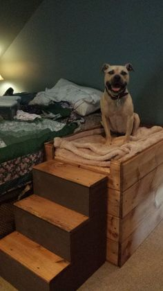 build dog bed & build dog bed + build dog bed projects + build dog bed frame + dog ramp for bed how to build + diy dog ramp for bed how to build + dog stairs for bed how to build + dog steps for bed diy how to build + how to build a dog bed Raised Dog Beds, Dog Stairs, Dog Ramp, Diy Dog Bed, Dog Furniture, Pet Beds, Dog Houses, Diy Stuffed Animals, Dog Supplies