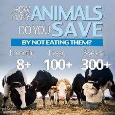 How many animals do YOU save by eating vegetarian or vegan? SO MANY ANIMALS: http://www.peta2.com/lifestyle/eating-meat-facts/