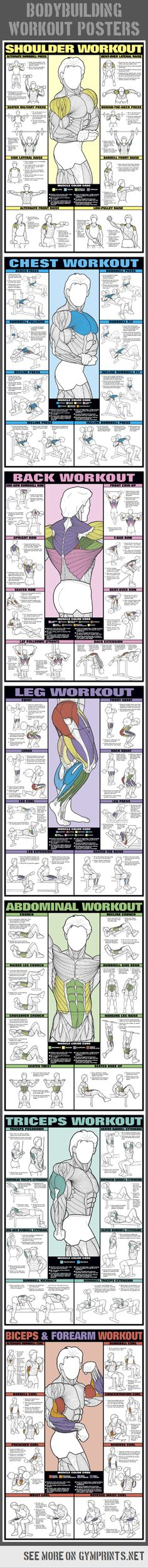 Bodybuilding workouts per bodypart - Wall Charts / Posters. #bodybuilding #gym #workout #training