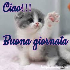 Happy Weekend Images, Italian Memes, Italian Life, Good Morning Good Night, Husky Puppy, Wordpress Theme, Encouragement, Life Quotes, Blog