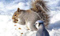 Knowing what to feed squirrels is important. By feeding squirrels, you can distract them from your bird feeders and help them thrive.