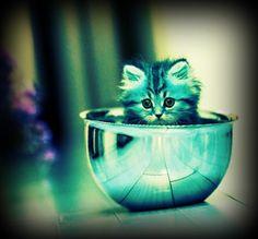 Awwww so cute !!!