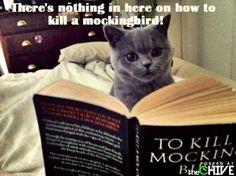 #HowTo NOT Kill A Mockingbird. #LOL ;)
